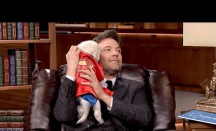 Ben Affleck Cuddles Superhero Puppies, Universe is Smitten