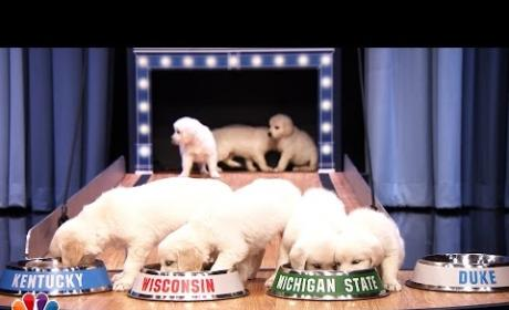 Puppies Predict Final 4 Winner