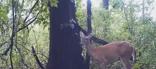 Deer Farts in Forest; Reddit Goes Nuts ('Cause Reddit is Reddit and Farts are Hilarious)