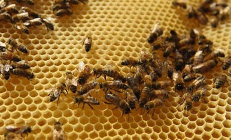 Killer Bees Kill Horses in Texas, Attack Couple