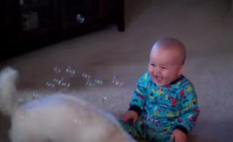 Dog Eats Bubbles, Baby Laughs, World Rejoices: VIDEO