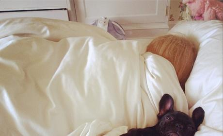 Lady Gaga Bathes, Accessorizes, ADORES Her Bulldog: See the Pics!