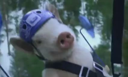 Maxwell the Geico Pig: Ziplining to Great Deals!