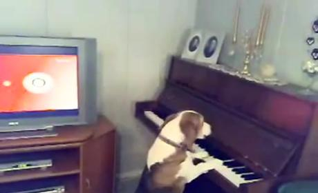 Dog Howls, Plays Piano Masterpiece