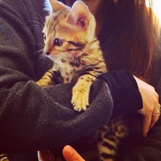 Kardashian Cat