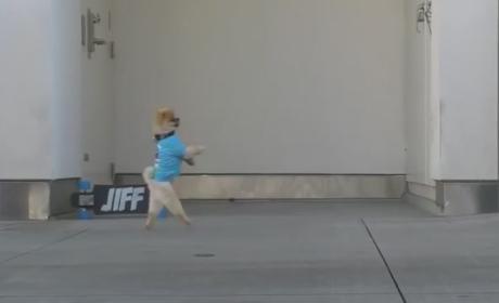 Dog Walks on Hind Legs, Backwards, Is Totally Amazing