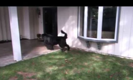 Little Girl and Enormous Dog Play Hide and Go Seek Again, Remain Adorable
