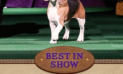 2015 Westminster Dog Show: Who Won?!?