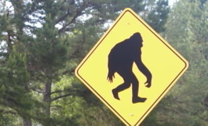 Bigfoot DNA Test Proves Creature is Totally Real … Maybe
