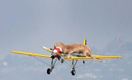Harrison Ford's Plane: Attacked By Weasel