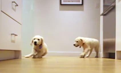 Puppy Time-Lapse Video Promises to Make You Smile
