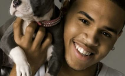 Chris Brown Under Fire For Dog-Breeding Business