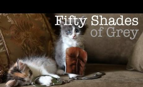 Kittens Reenact Fifty Shades of Grey Trailer, Disturb/Crack Up the Internet