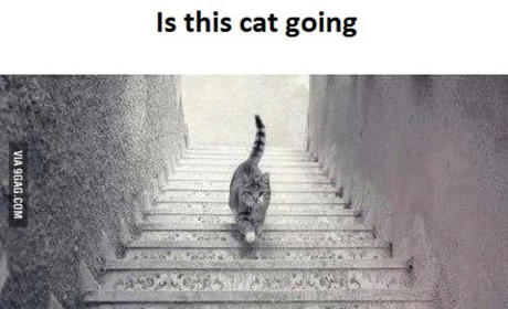 Cat Photo Divides Internet: Which Way is This Feline Going?