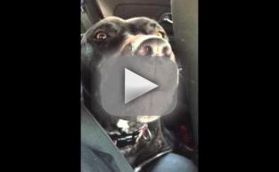 Emotional Dog Loves Adele, Must Have Called 1,000 Times