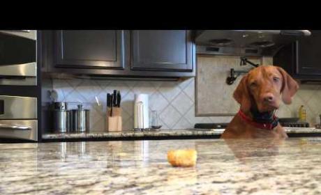 Dog Really Wants Tater Tot