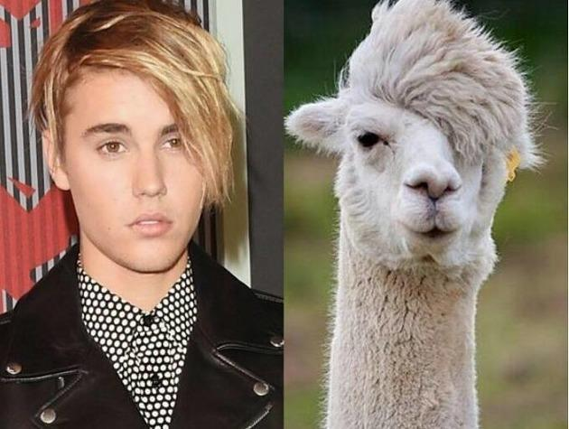 Animals that look like justin bieber