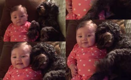 Dog Sacrifices Self to Save Baby in House Fire