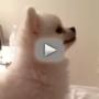 You've Never Seen an Animal Sneeze Like This