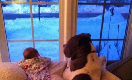 Staring at the Snow
