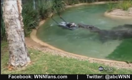 Crocodile Tries To Eat Lawn Mower