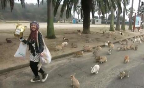 Rabbits SWARM Tourist on Japanese Island: Watch, Be Amazed Now!