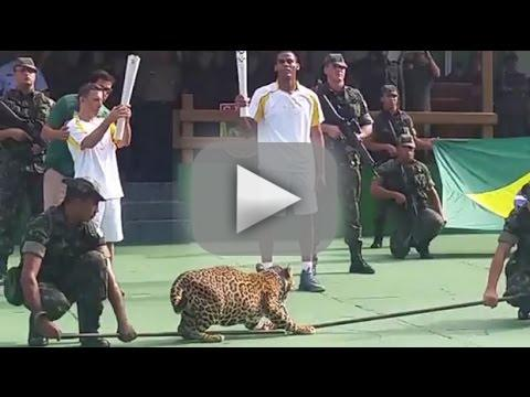 Amazon jaguar shot dead right after olympic torch ceremony