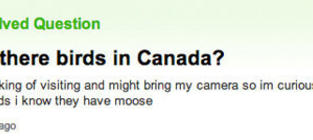 19 Yahoo Questions To Make You Question Humanity