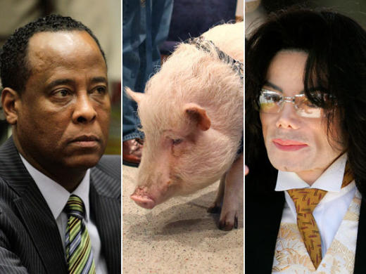 Murray-Pig-MJ