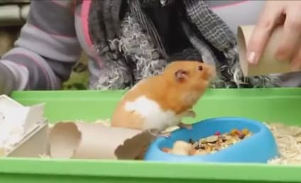 Hamster Rises from the Dead in England!