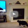 Cat Sees Donald Trump on Screen, Flees in Terror