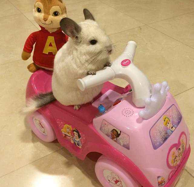 Chinchilla Drives