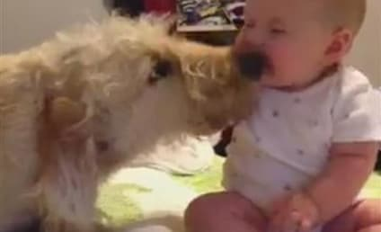 Baby Knocked Over By Dog Kisses: Watch, Melt Now!