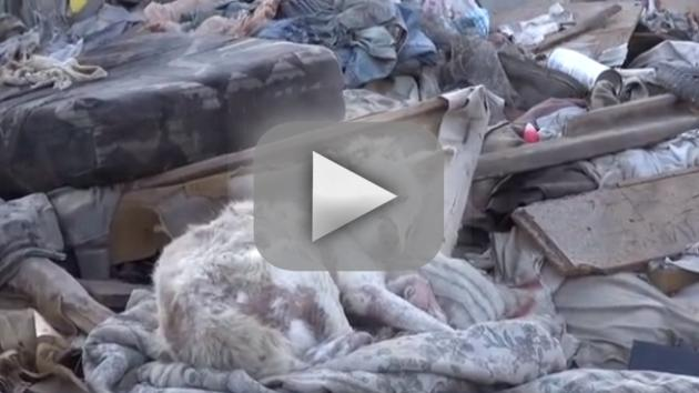 Dog Rescued from Trash Pile, Nursed Back to Health