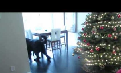 Giant Dog Plays Hide-and-Seek with Adorable Young Owner: Watch, Melt Now!