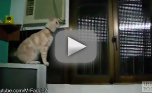 Hilarious Cat Fails: They Can't Jump!