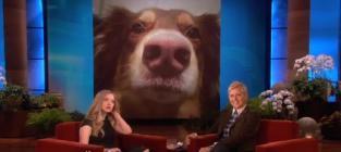 Amanda Seyfried Loves Her Dog