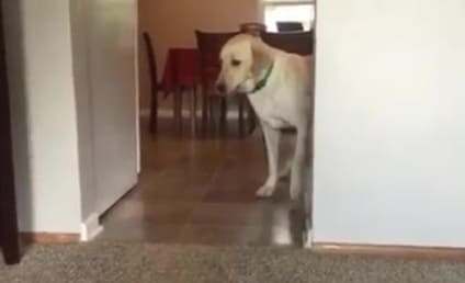 Hilarious Dog Overcomes Fear of Living Room Carpet