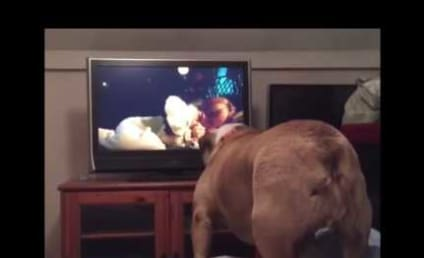 Bulldog Watches Horror Movie, Tries to Save Character
