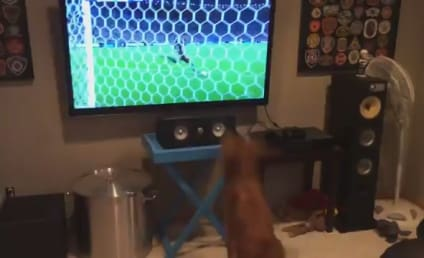 Dog Watches World Cup, Is Way Bigger Fan Than You Are