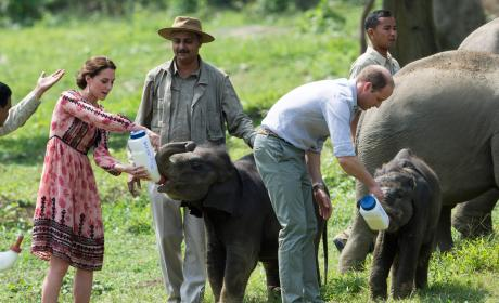 Prince William and Kate Middleton Feed Baby Elephants