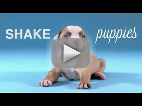 Puppies shake up off H2O will have your day
