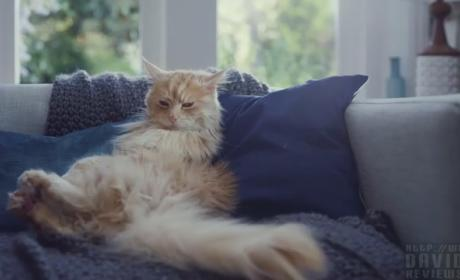 Cat Yearns to Be Dog in New Viral O2 Ad