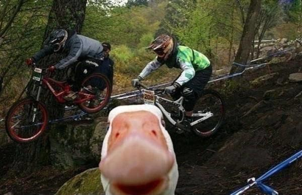Duck Photobomb