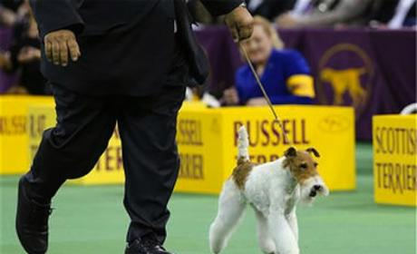 Westminster Best in Show 2014 Crowned