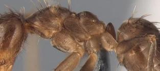 Crazy Ants Are Crazy, Terrorizing Homes Across the Southeast