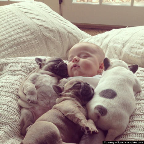 Baby and Bulldogs