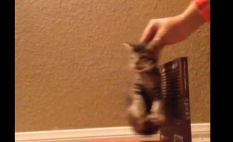 "Cat Parodies ""Wrecking Ball"""