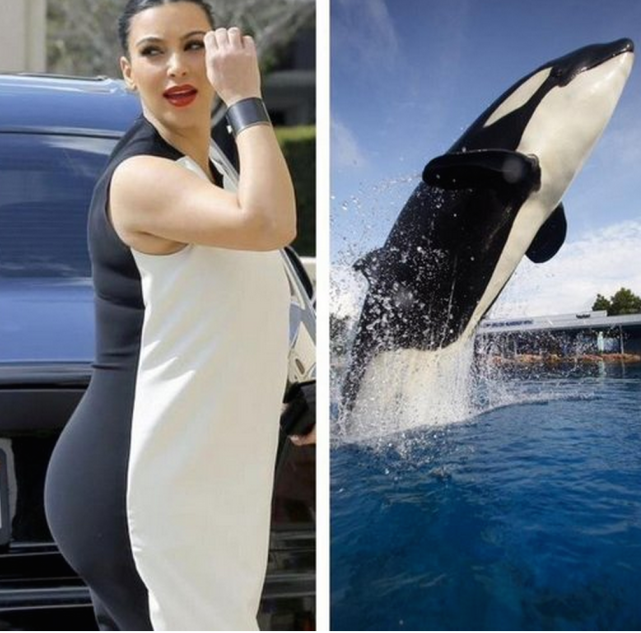 Kim Kardashian vs. Killer Whale