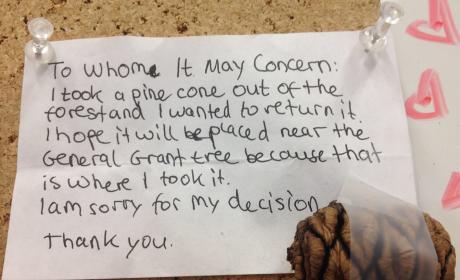 Child Returns Stolen Pinecone, Apologizes to National Park